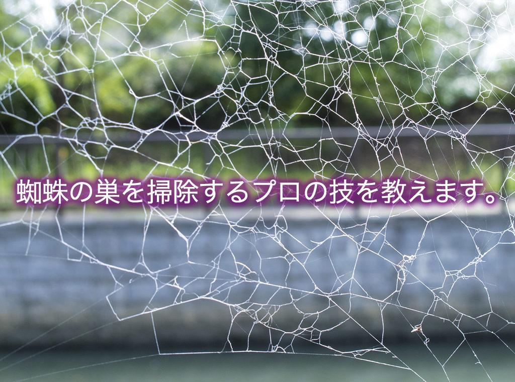 蜘蛛の巣を掃除するプロの技を教えます。