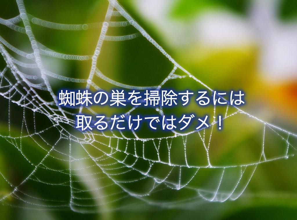 蜘蛛の巣を掃除するには取るだけではダメ!